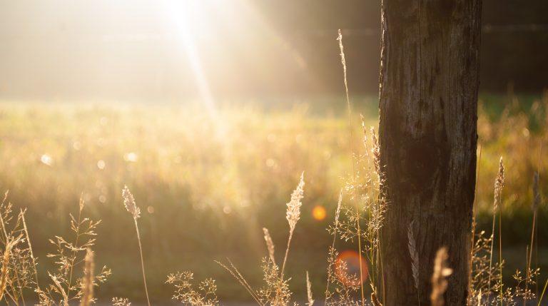 Bring in some Sunshine – meditation (Video)