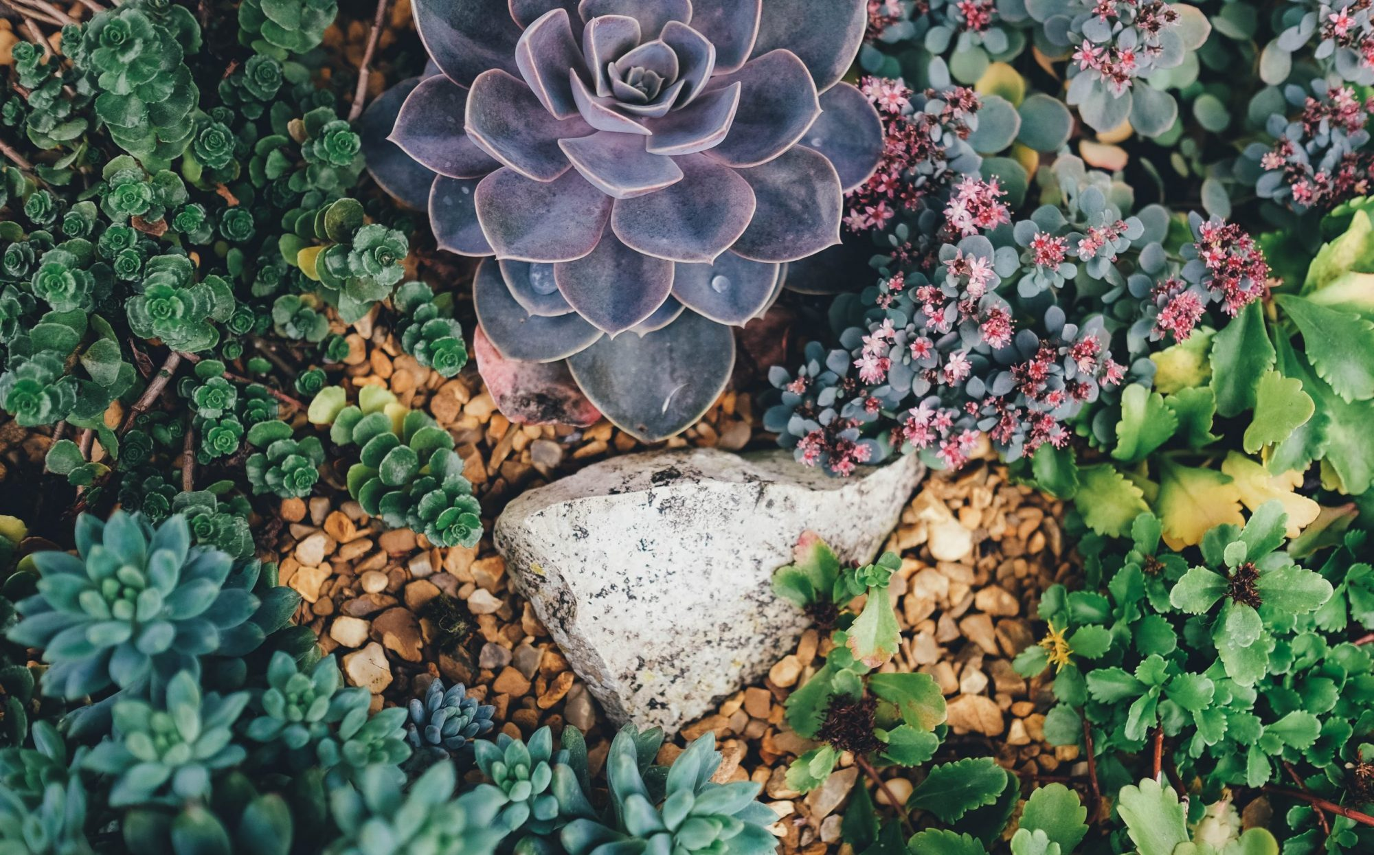 Healing Generational Trauma: the Gateway to Compassion