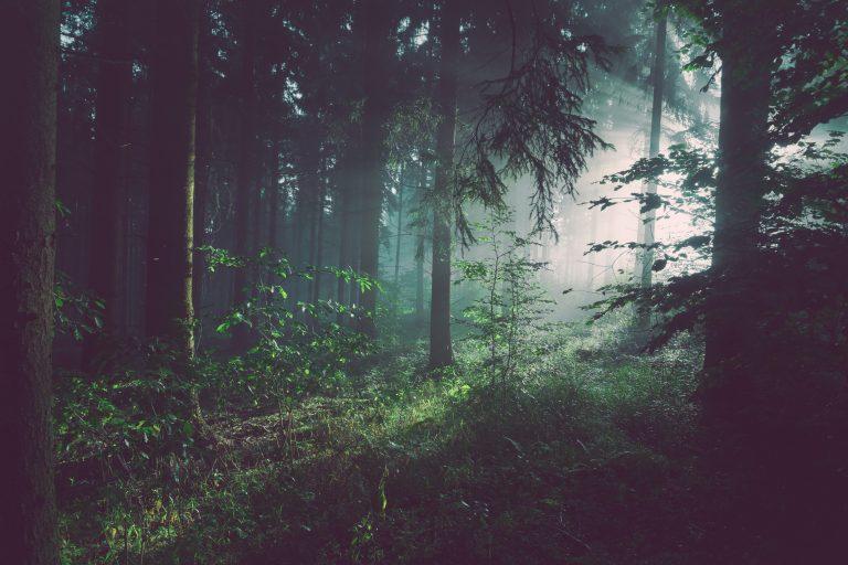 Forest Meditation (Video)
